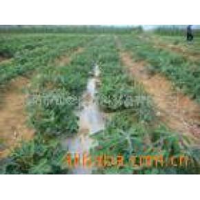 草莓用地膜 河南 PE 塑料农、渔制品