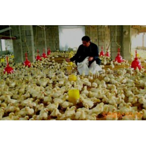 肉鸡饲养大棚膜 濮阳 PE