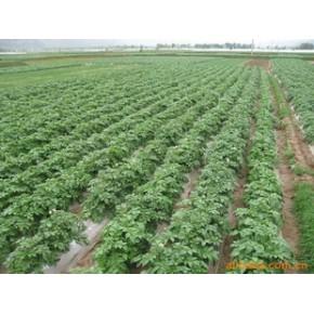 供优质农地膜,除草膜,黑膜,降解膜,流滴膜大蒜膜等