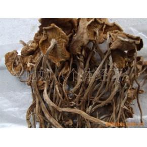 优质干茶树菇 一级茶树菇