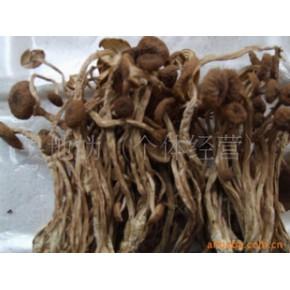 优质茶新菇 干茶树菇 江西