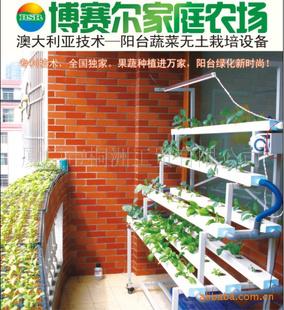 【无土栽培家庭阳台屋顶庭院健康蔬果菜园】
