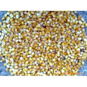 云南地区玉米 云南昆明 玉米