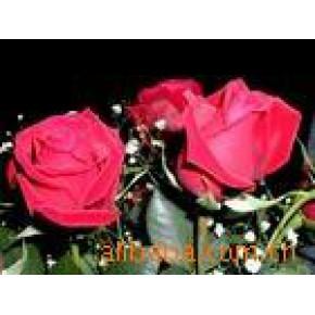 玫瑰油 玫瑰精油  野玫瑰油
