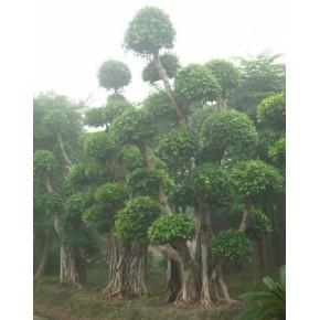 园林绿化改造   园艺绿化施工  景观工程设计