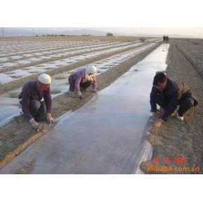 优质大蒜膜 具有保温增产功效