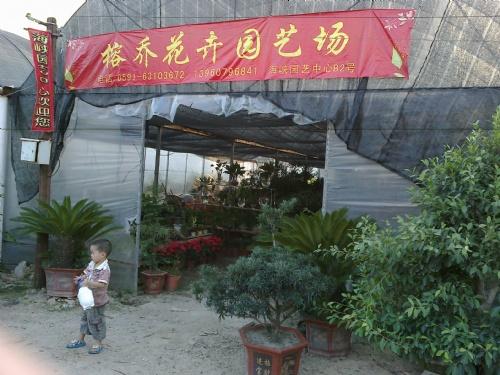 平潭榕乔花卉园艺有限公司