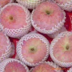 优质红富士苹果 山西运城
