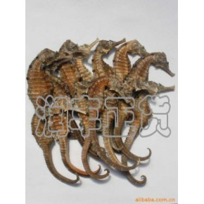 优质天然海马(汕头优质海马)