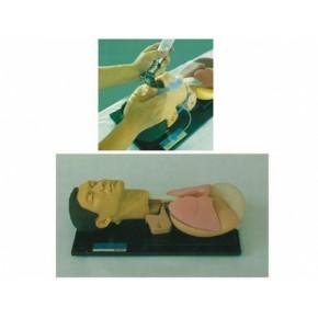 高级气管插管训练仿真模型 急救训练模型 医学模型