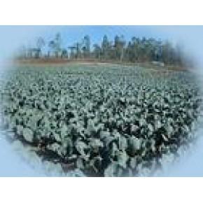 甘蓝红着色剂是纯天然的、可食用的、安全的着色剂