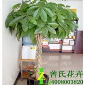 曾氏花卉成都花卉配送公司|养护花卉的优点 |成都植物批发