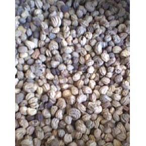 批发:旱金莲种子,旱金莲种子价格,旱金莲种子批发价格