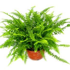 郑州室内植物租赁养护