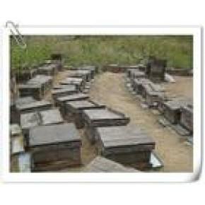 优质蜂蜜 蜂蜜 24(个月)