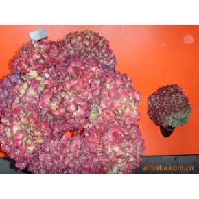 优质圣诞花球原料 天然花材