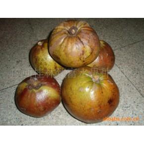 批发供应茶果,每个茶果可达1-2公斤