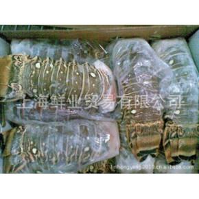 鲜业冻品供应古巴龙虾尾进口水产品/海鲜冻品批发