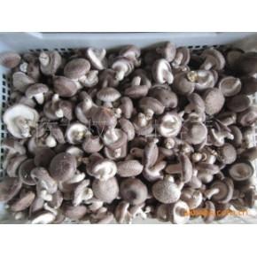 中国香菇之乡远安鲜香菇干货特产