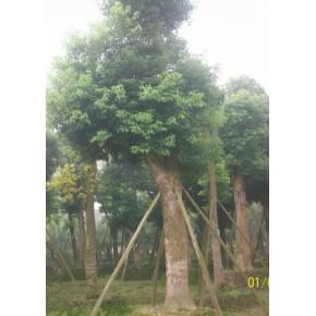 园艺设计公司  景观设计工程公司   绿化苗木培植