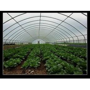 育苗温室|温室工程|云南育苗温室