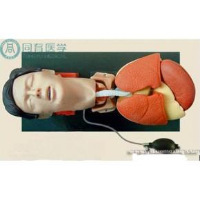 苏州同科医疗生产成人气管插管训练仿真模型