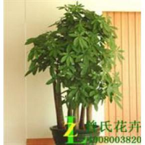 成都花卉租摆信任曾氏花卉成都植物租赁||