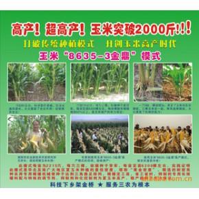玉米超高产栽培模式(玉米 高产 新技术 科技)