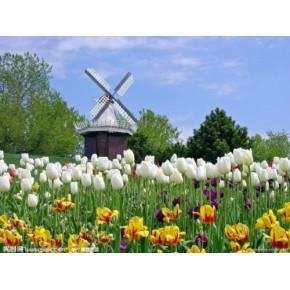 荷兰投资移民优势何在 高额代理返利 有保障
