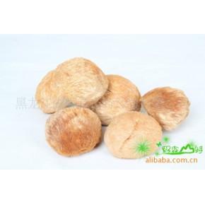 猴头菇 猴头 蘑 颜色好 味道纯 蘑菇