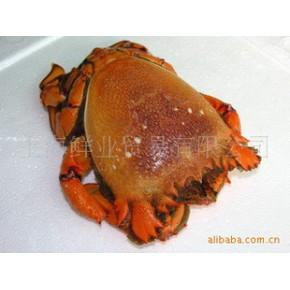 进口越南(缅甸)老虎蟹进口海鲜批发