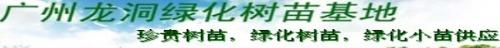 广州龙洞绿化树苗基地