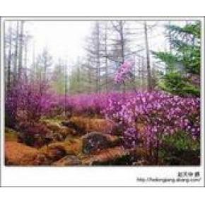 南京到伊春旅游线路:伊春绿色生态避暑四日游/伊春旅行社