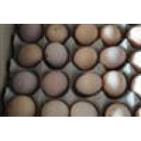 正宗优质土鸡蛋 土鸡 95(%)