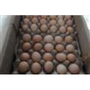 优质农家土鸡蛋 鸡蛋 特级
