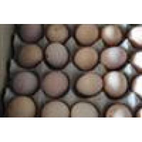 农家优质土鸡蛋 土鸡 95(%)