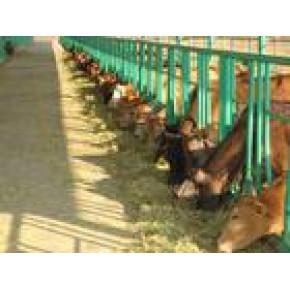 常熟本地哪里卖牛 卖牛有没有卖肉牛的养牛场