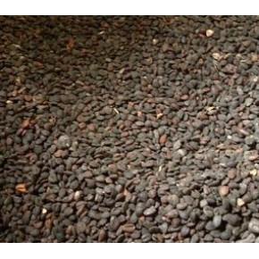 批发:厚朴种子,厚朴种子价格,厚朴种子批发价格,厚朴种子