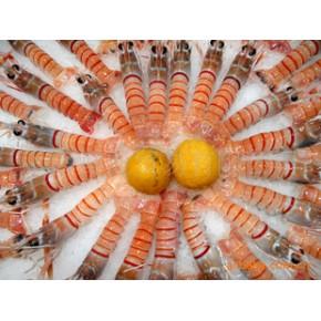 南极斯干比龙虾/新西兰挪威海蜇虾(纽西兰海蜇虾)/进口水产品