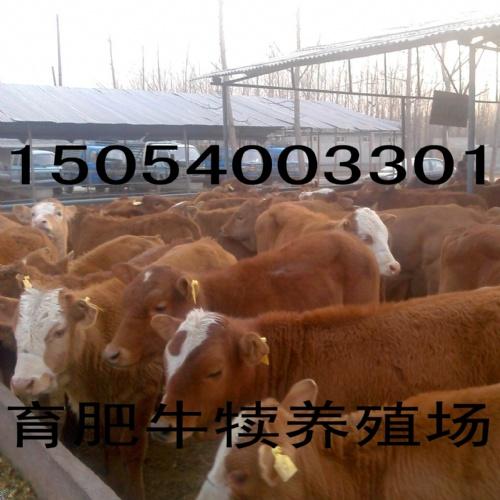 山东高科牧业牛羊养殖场