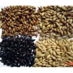 澳麦芽 澳大利亚 大麦