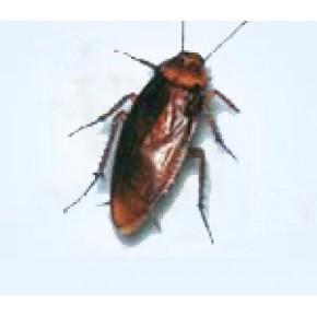 浦东灭虫公司,浦东杀虫公司021-54303723上海杀虫公