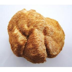野生猴头菇