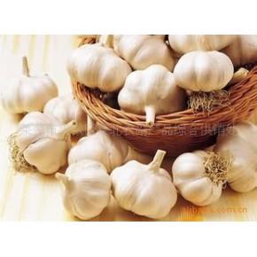 各种规格新鲜大蒜 白皮蒜