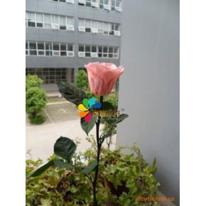 专业生产优质单枝玫瑰保鲜花