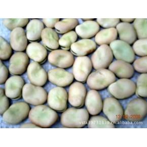蚕豆  规格100克50-60粒/60-70粒/70-80粒